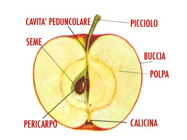 mela-parti