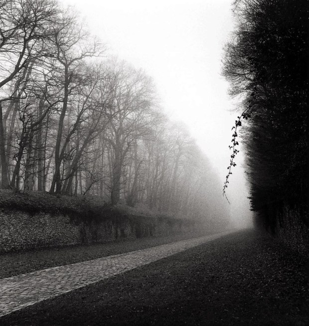 michael-kenna-suspended-vine-marly-france-1995