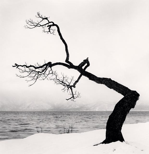 Kussharo Lake Tree, Study 15, Kotan, Hokkaido, Japan. 2009