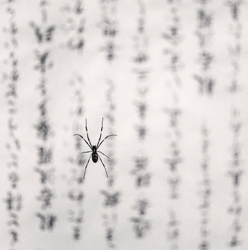 spider-and-sacred-text-study-1-gokurakuji-temple-shikoku-japan-2001-testo-e-intessere