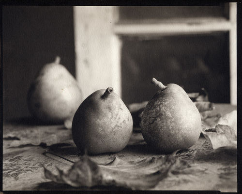 pears_with_leaves